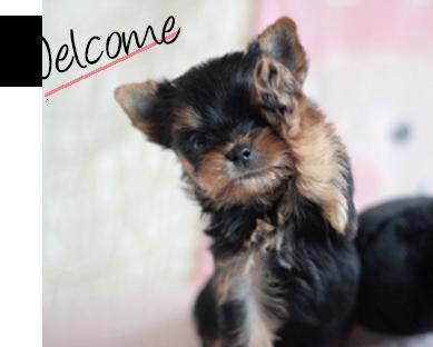 Welcomeの文字とヨーキー子犬の写真